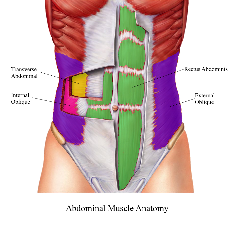 abdominal muscle group The abdominal muscle tears sore hip after exercise pain in outside of hip and where is my hip flexor that hip flexor anatomy diagram infomation.